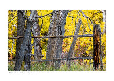 Lucas Homestead Historic Site, Castlewood Canyon State Park, CO