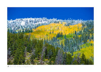 Early snow and aspens near St. Elmo, CO