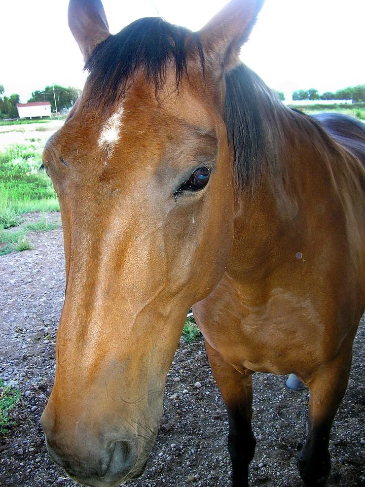 Friendly Brown Horse