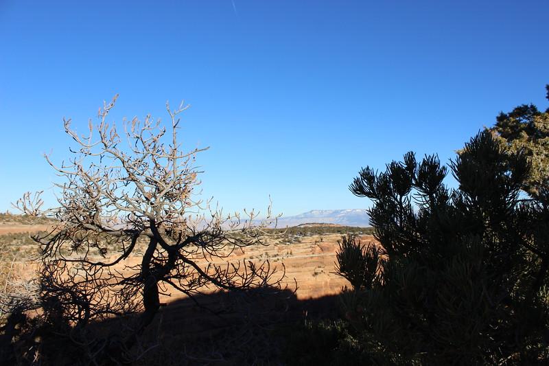High Desert Plants in Winter