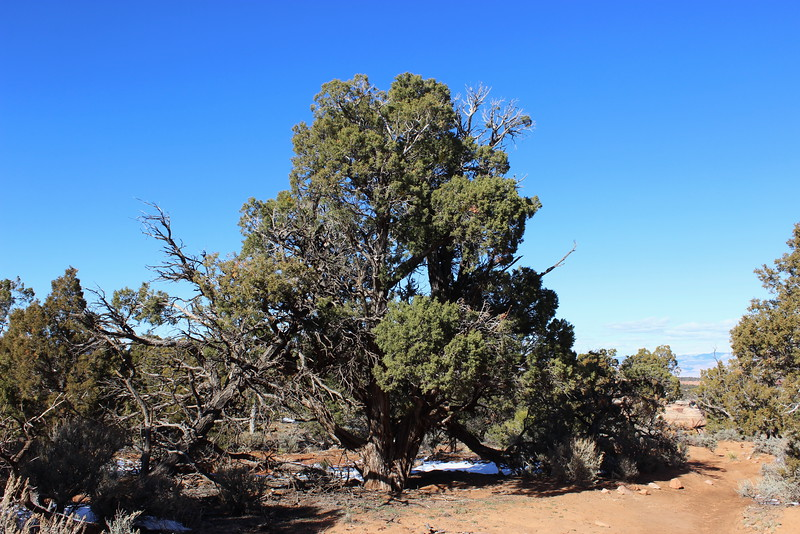 Pinyon-Juniper Woodland