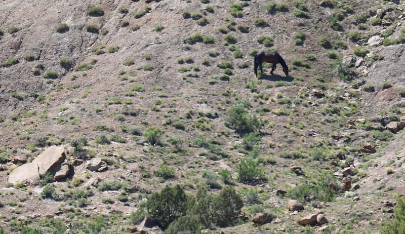 Wild Horse Area