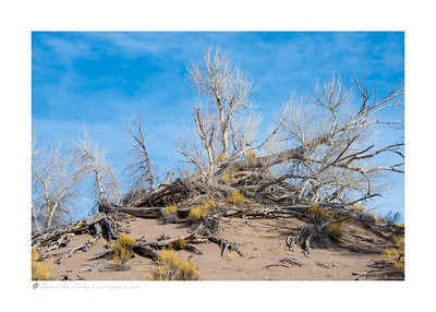Backcountry dune detail, Great Sand Dunes National Park, Winter