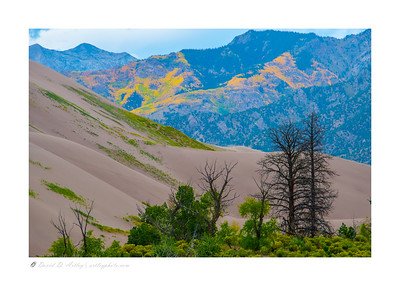 Aspen Groves, Sangre de Cristo Mountains from Great Sand Dunes National Park, CO