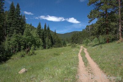 """Old wagon road heading toward """"Homestead Meadow"""""""