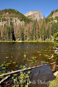 Nymph Lake and Hallett Peak. The lake was named after the water lilies that grow there, which are members of the Nymphaeaceae family.