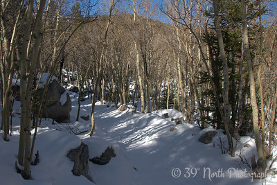 The trail to Alberta Falls