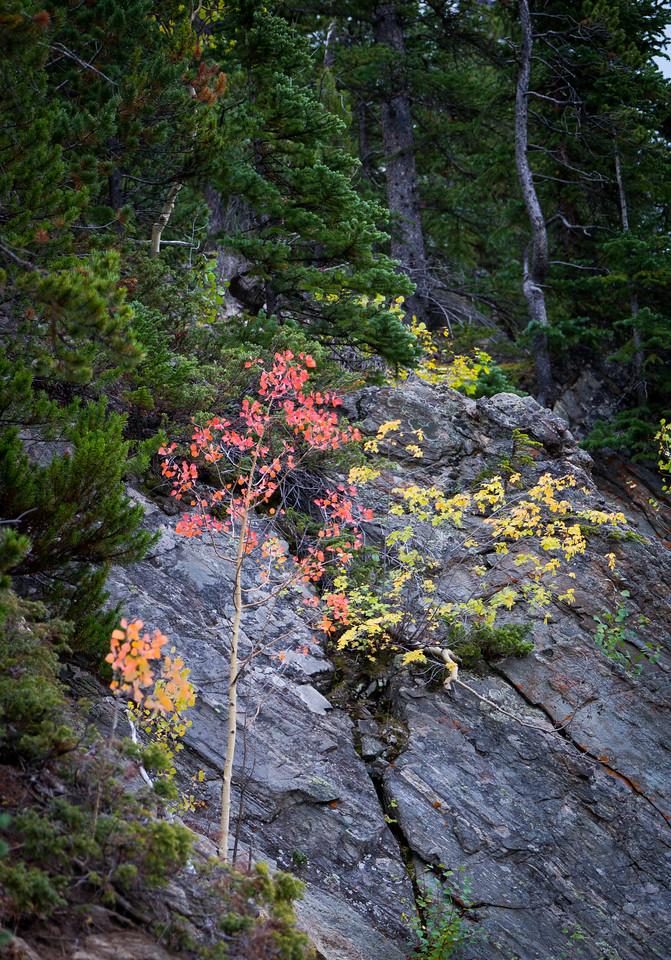 Fall colors.
