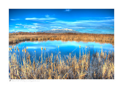 Cattails and pond, Monte Vista National Wildlife Refuge, CO