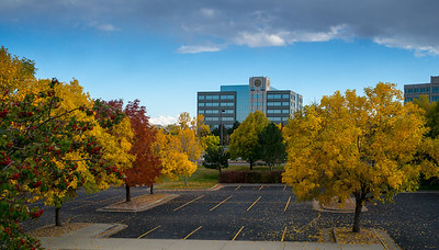 DTC - Fall Colors