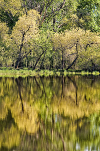 Spring Reflections - Pastorius Reservoir