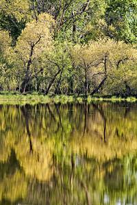 Spring Reflections - Pastorius Reservoir
