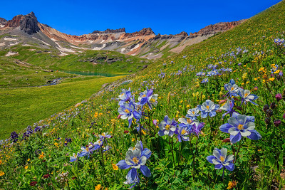 Columbines, Ice Lake Basin