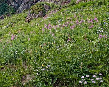 Wildflower hillside - Geneva Lake trail