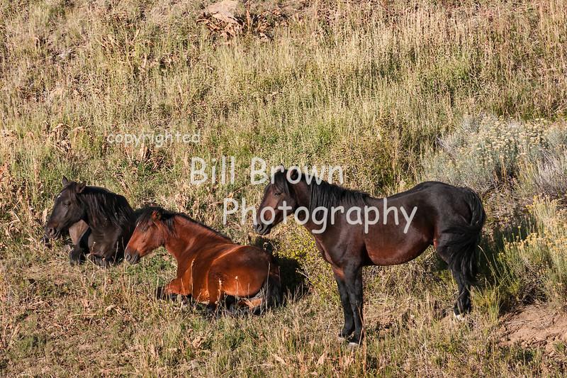 Wild horses enjoying the morning sun