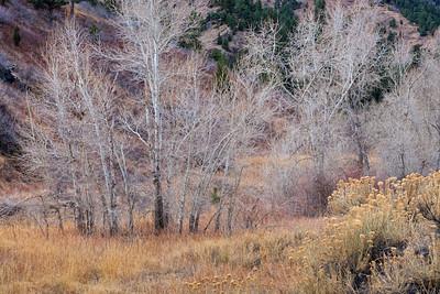 Cedar Gulch trailhead