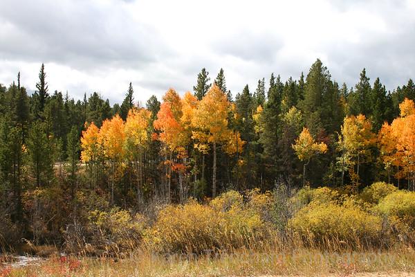 Fall aspen near Caribou Ranch, Colorado