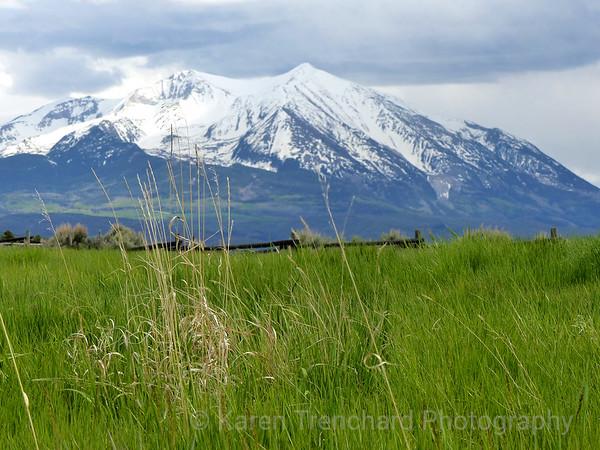 Mt. Sopris and Wheat Grass