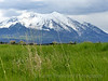 Mt. Sopris and Wheat Grass