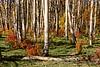 Pike National Forest Fallen Log