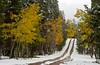 Snow and fall foliage along the road through Poudre Canyon, Colorado, USA, America.