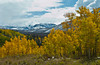 Autumn color in the aspen trees along the Flat Tops Scenic Byway between Yampa and Buford, Colorado, USA, America.