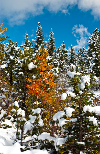 Snow and fall foliage on Hwy 119 near Nederland, Colorado, USA, America.
