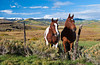Horses in the pasture on the  Flat Tops Scenic Byway between Yampa and Buford, Colorado, USA, America.
