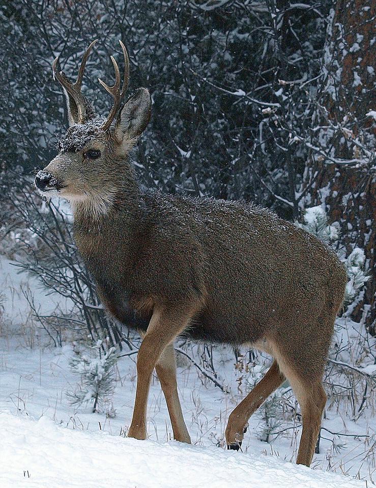 Cold Colorado morning...
