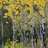 Late Sept 2012 - Aspens