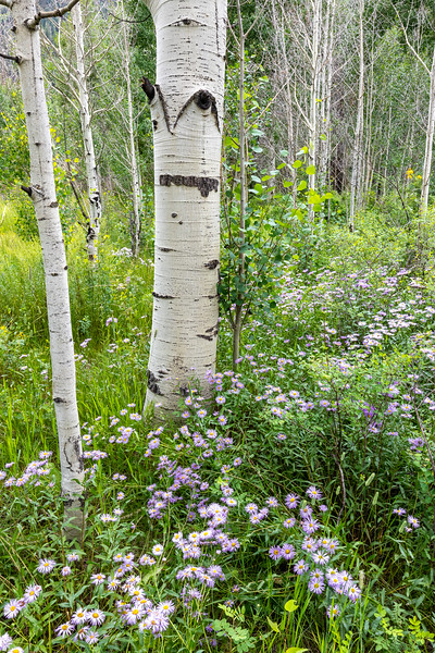 Purgatory Flats Flowers and Trees 1