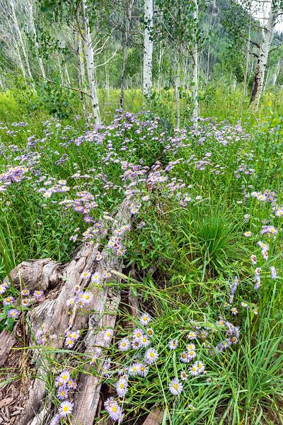 Purgatory Flats Flowers and Trees 2