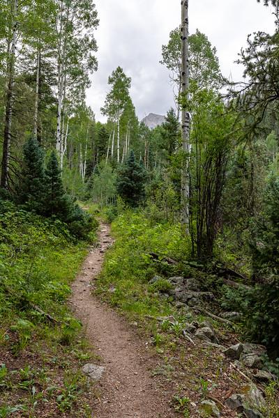 Needle Creek Trail