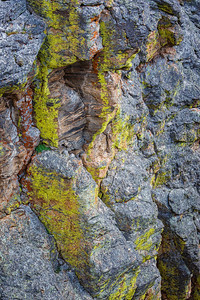 Lichen, The Rock Cut, Trail Ridge Road