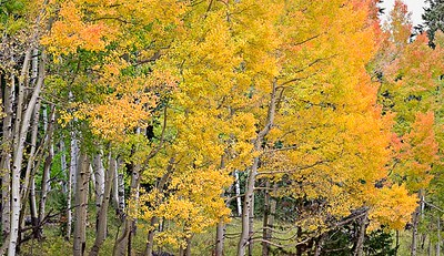 Aspen - Imogene Road - September, 2004 5 vertical image stitch