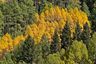 Forest Variety Imogene Road - September 2004