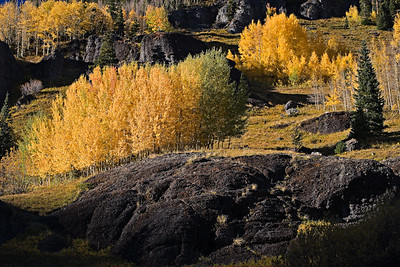 Fall Aspen, Imogene Road, Ouray