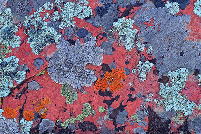 Lichen, South Mineral Creek