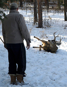 Dean coaxing the buck up. Still partially sedated, the deer struggled mightily to get up under his own power.