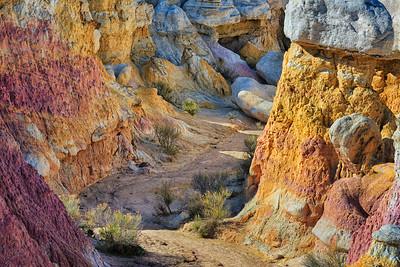 Paleosol, Dawson Formation, Eocene