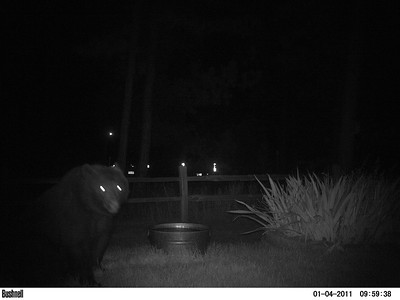 The bear returned 3 hours and 45 minutes later the same night.  Date is actually 10-11-2016 @ 03:26AM.