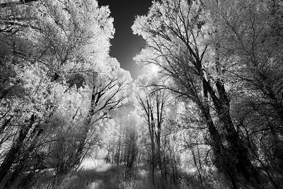 Gunnison Cottonwoods