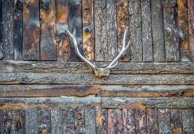 Elk Creek Antlers