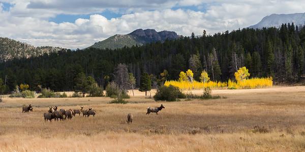 Elk and Aspen