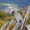Carson Log Cabin Ruins