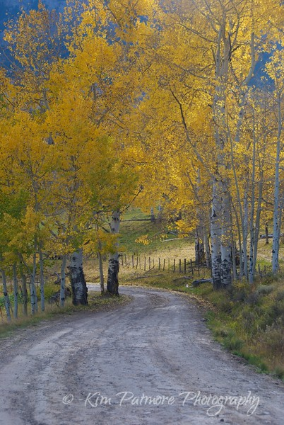 Fall Beauty, near Telluride, Colorado