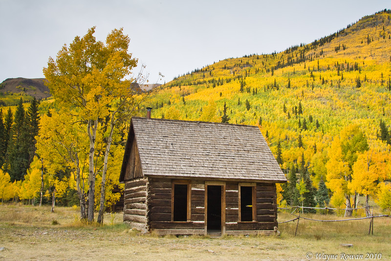 Cabin with Yellow Aspens