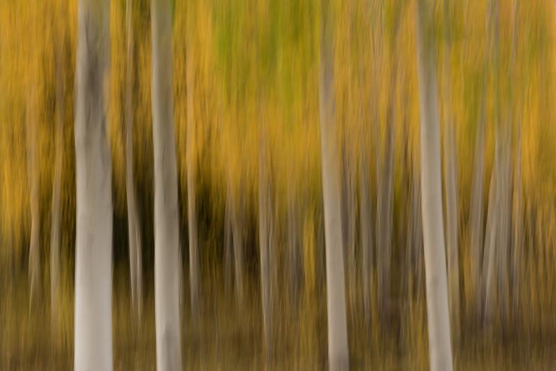Fall Color Swipe