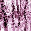 Aspens - Woodland Park