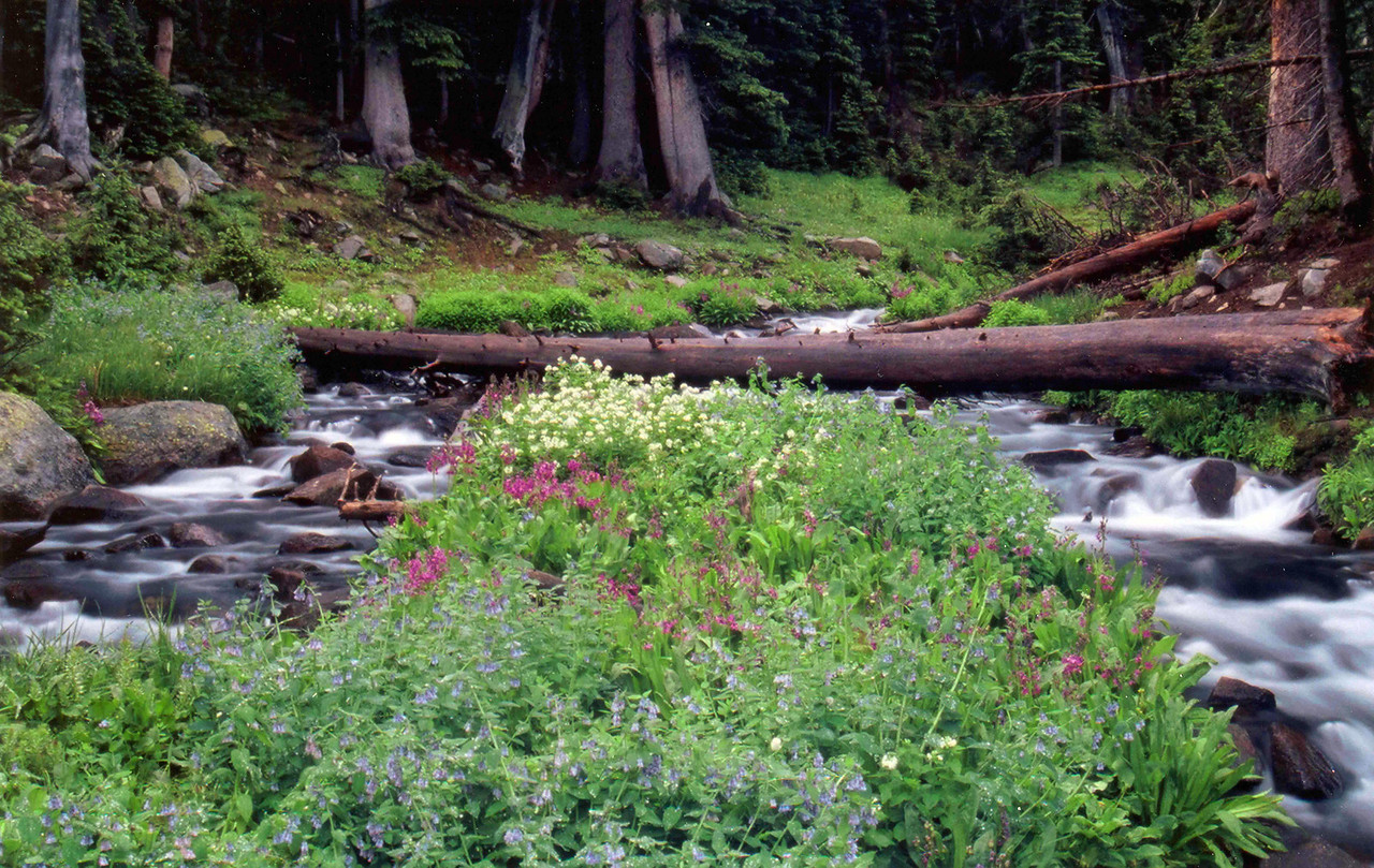 Indian Peaks Wilderness Area